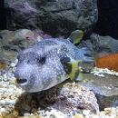 久慈地下水族科学館もぐらんぴあ