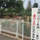 バラ園 (伊奈町記念公園)
