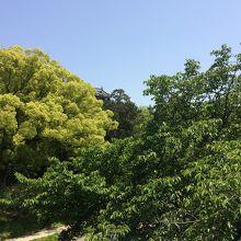 緑に囲まれて外からの景色は美しかったです。