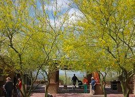 アリゾナ ソノラ砂漠博物館