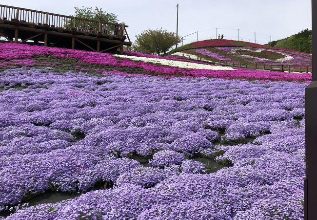 平田村の遅い春