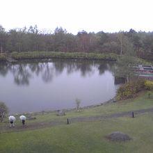 ホテル敷地内には小さな湖もあります。