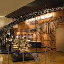 丹波竜化石工房ちーたんの館