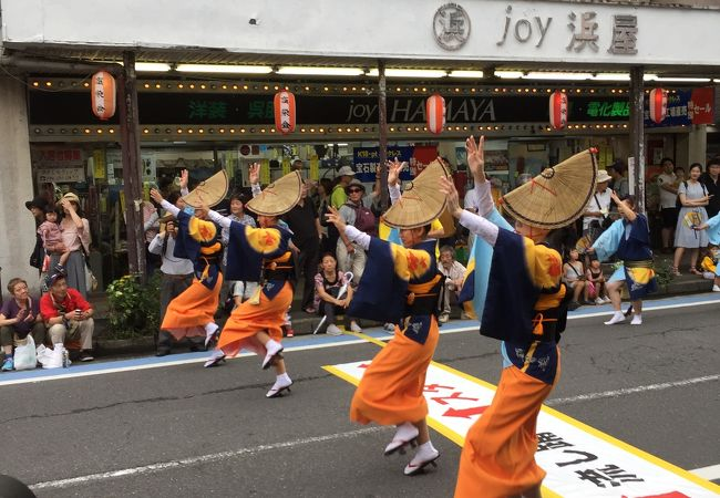 神奈川大和阿波おどり