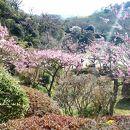 中山寺庭園