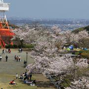 春は桜の名所でした