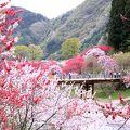 ■ 月川温泉花桃の里は南信州の桃源郷