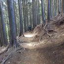 大山の原生林