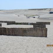 浜松の砂丘です