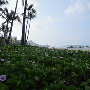 ワイキキ屈指の楽園リゾート、ヒルトンハワイアンビレッジの海岸側にあるビーチです。