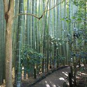 竹の庭で有名