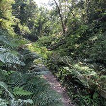 森の中の歩道