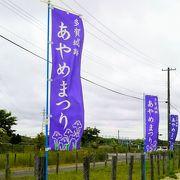 「多賀城跡あやめまつり」2018年は6月16~30日