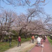 桜スポットが多いイベントでした。