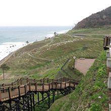 階段に沿っていけば千枚田です