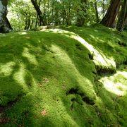 梅雨時期の苔は生き生きして最高。新緑と苔!