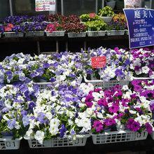 花や植木も売られていました。