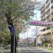 出店や屋台が並び桜に華を添えてくれます