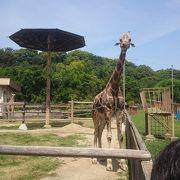 動物園&プリキュアショーを楽しみました