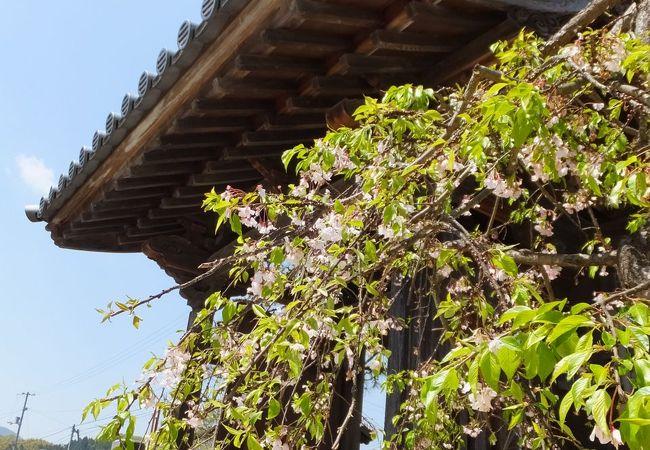 春は桜がきれいだろうなあ。
