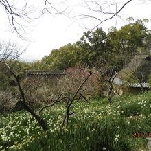 四国村の遊歩道