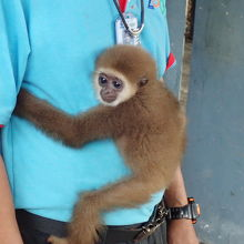 猿のショーは最悪でしたが、ショーに出なかっ子ザルは可愛いです