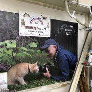 動物写真家 岩合光昭さんのねこショップ