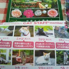 ちょっと天気が怪しくても,楽しめる猫カフェ&バラ園〜
