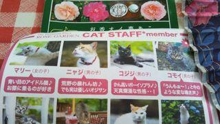 ちょっと天気が怪しくても,楽しめる猫カフェ&バラ園~
