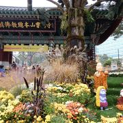 晩秋は菊。花咲き誇る寺院