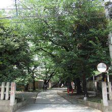 参道前 (桜並木が続きます)