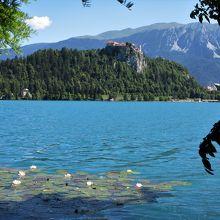 ブレッド湖と睡蓮