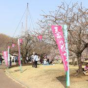 様々な種類の桜が植えられています