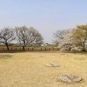 ここの脇に、有名な薄墨桜があります