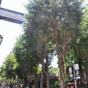 緑の高木が林立している公園。歩き疲れた時の休息の場所にもなった