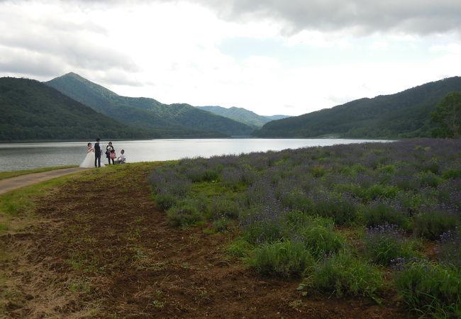 湖畔のラベンダー畑