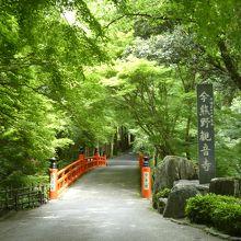 5月は新緑がとてもきれいでした
