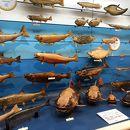 海とくらしの史料館