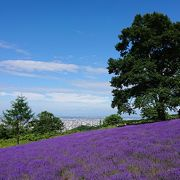 札幌市内のラベンダー畑