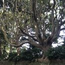 酒列磯前神社および酒列磯前神社の樹叢