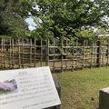 写真:車返桜 (京都御苑内)