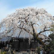 知られざる枝垂桜の名所