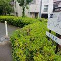 写真:谷川緑道