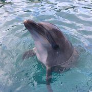 イルカにタッチ&クジラに餌やりが楽しかった☆