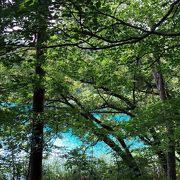 エメラルドグリーンの沼