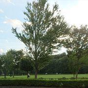 広い緑の公園