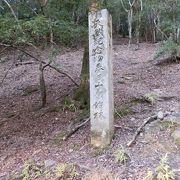 春日山原始林の中を通る道は歩き易い