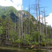 立ち枯れの木々が多い