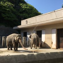 本当に立派な象です