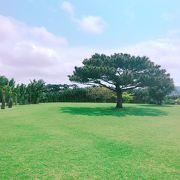 沖縄がぎゅーっと詰まったやいま村